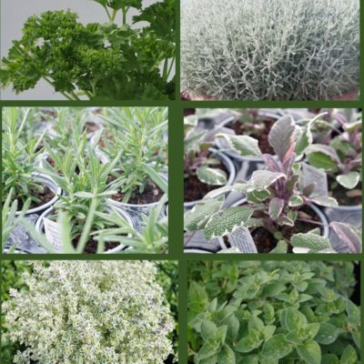 Winter herb collection